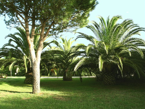 Ferienwohnung Vecchi-BP (870865), Campiglia Marittima, Livorno, Toskana, Italien, Bild 14
